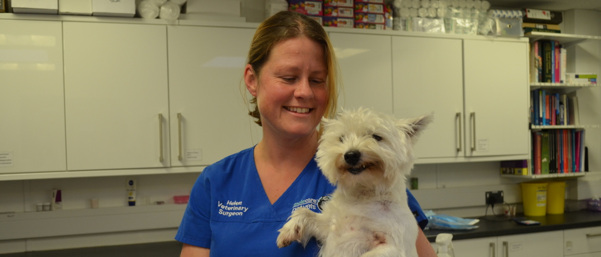 newton abbot small animal and pet vets